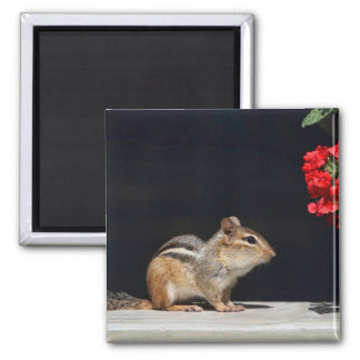 Chipmunk and Red Flowers Photo Fridge Magnet
