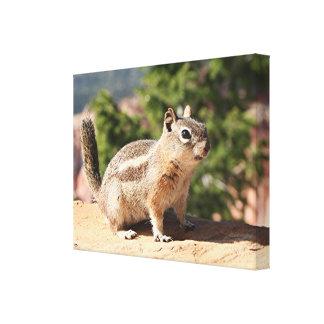 Chipmunk at Bryce Canyon, Utah Canvas Print