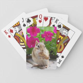 Chipmunk cards