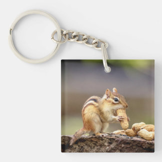 Chipmunk eating a peanut key ring