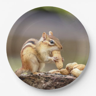 Chipmunk eating a peanut paper plate