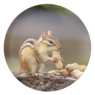 Chipmunk eating a peanut plate