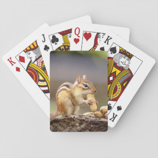 Chipmunk eating a peanut playing cards