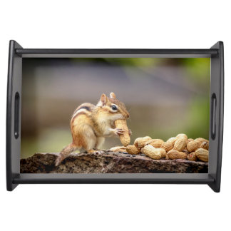 Chipmunk eating a peanut serving tray