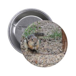 Chipmunk Feeding on Ground Buttons