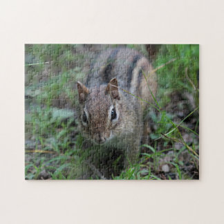Chipmunk in the forest jigsaw puzzle