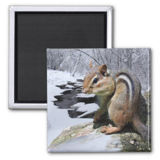 Chipmunk in the Snow Square Magnet