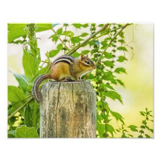 Chipmunk on a Fence Post Photo Art