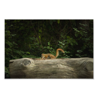 Chipmunk on a Log Photo Print