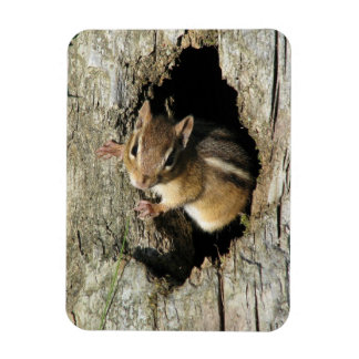 Chipmunk Peeking Out Rectangular Photo Magnet