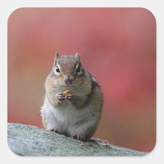 Chipmunk Square Sticker