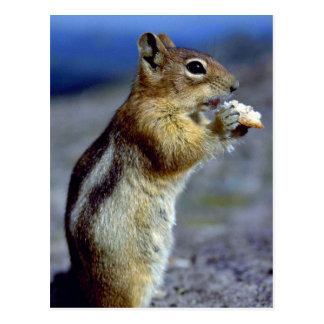 Chipmunk Standing And Eating, Profile Postcard