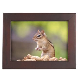 Chipmunk with peanuts keepsake box