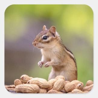 Chipmunk with peanuts square sticker