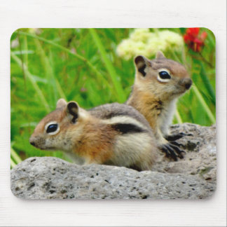 Chipmunks and wildflowers mouse pad