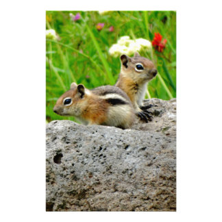 Chipmunks and wildflowers customized stationery