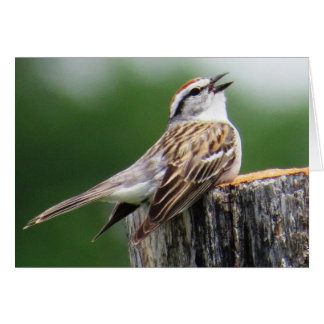 Chipping Sparrow Card