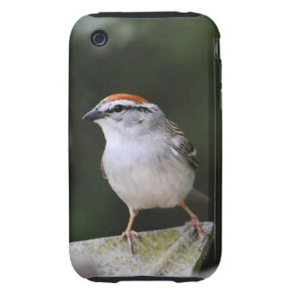 Chipping Sparrow Tough iPhone 3 Covers