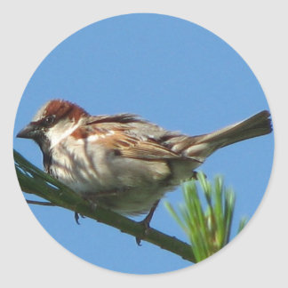 Chipping Sparrow Classic Round Sticker