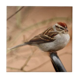 Chipping Sparrow Tile