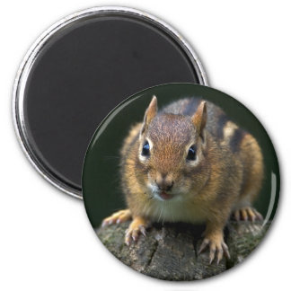 Chippy The Chipmunk Magnet