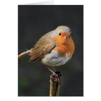 Chirpy Robin Greeting Card