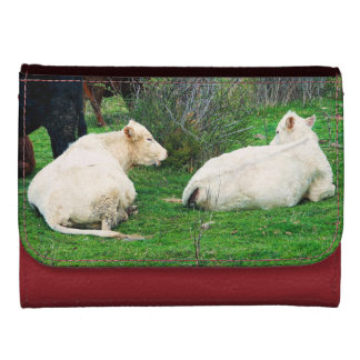 Chit Chat Wallet