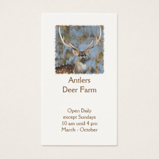 Chital deer farm stag photo business card