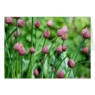 Chive flower buds card