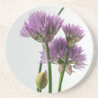 chives in bloom coaster