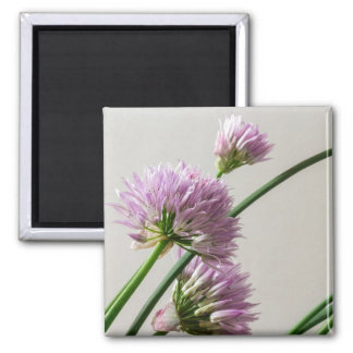 chives in bloom magnet