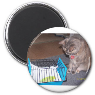 Chloe the Cat Helping you to relax Refrigerator Magnets