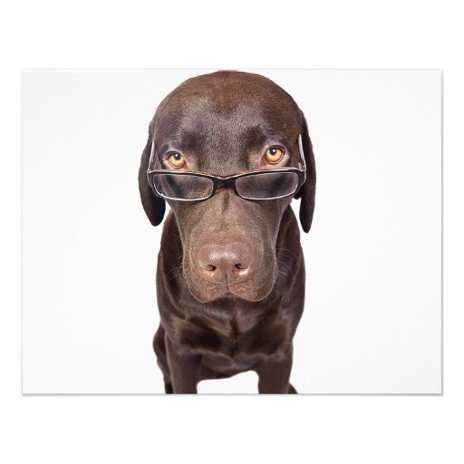 Choccy Lab in Glasses Invites