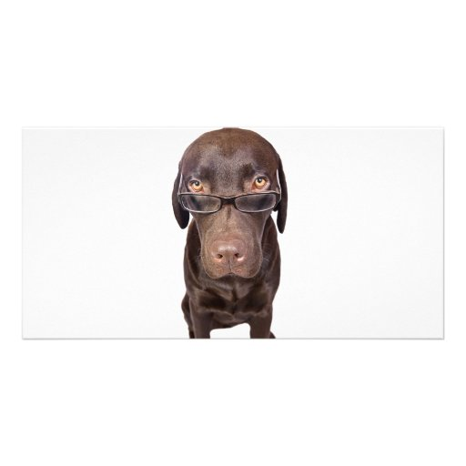 Choccy Lab in Glasses Photo Card Template
