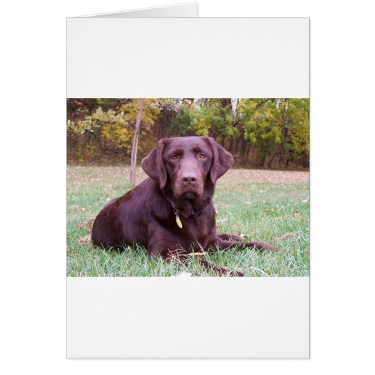 Chocolate Lab Card