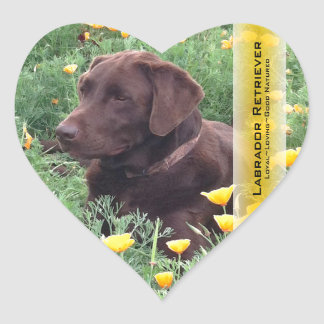 Chocolate Lab in California Poppy Patch Heart Sticker