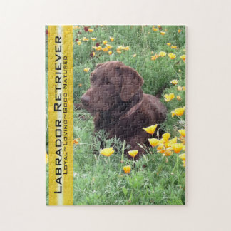 Chocolate Lab in California Poppy Patch Jigsaw Puzzle