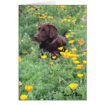 Chocolate Lab In California Poppy Patch Photograph Greeting Cards