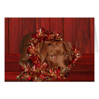 Chocolate lab mix Christmas Card
