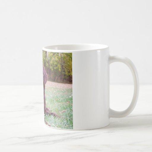 Chocolate Lab Coffee Mugs