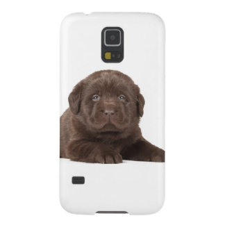 Chocolate Lab Puppy Cases For Galaxy S5