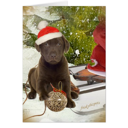 Chocolate Lab Puppy Christmas Cards
