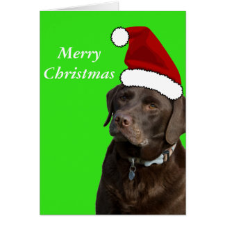 Chocolate Labrador Christmas Card
