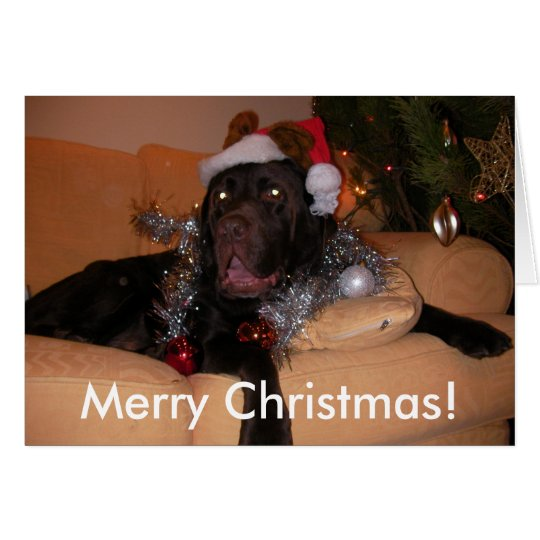 Chocolate Labrador Christmas Cards