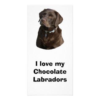 Chocolate Labrador dog photo portrait Customised Photo Card