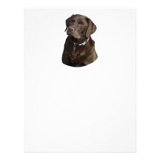 Chocolate Labrador photo portrait Full Color Flyer