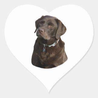 Chocolate Labrador photo portrait Heart Sticker