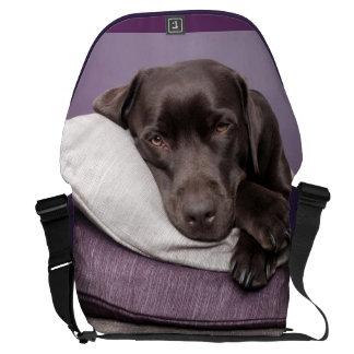 Chocolate labrador retriever dog sleepy on pillows courier bag