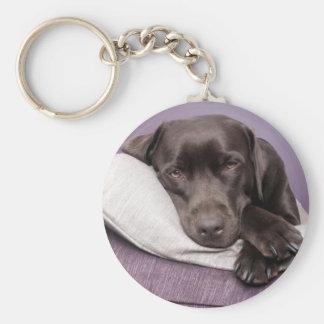 Chocolate labrador retriever dog sleepy on pillows key ring