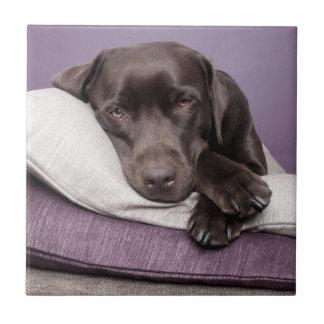 Chocolate labrador retriever dog tired on pillows tile